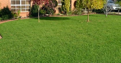 Kenda Kikuyu Grass Layed in Backyard