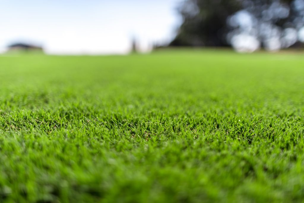 Couch Turf Types - Ideal for Brisbane QLD Conditions