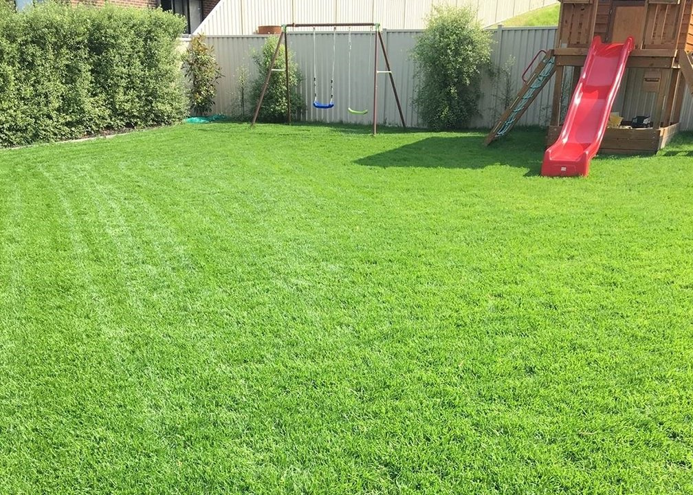 Kikuyu Turf Types - Ideal for Brisbane QLD Climate Conditions