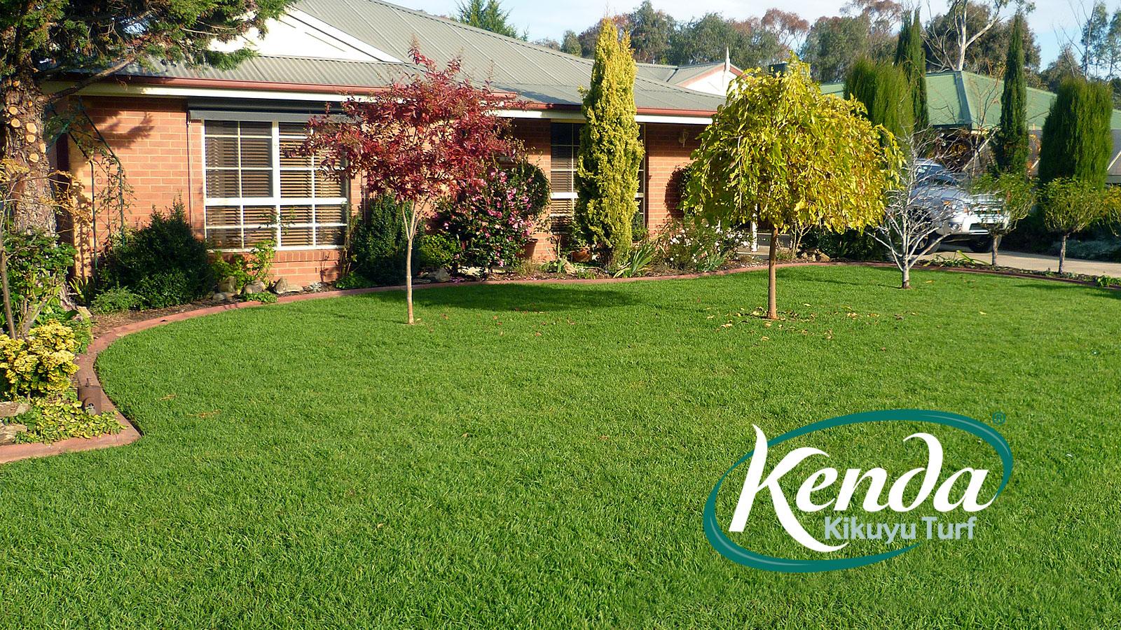 Kenda Kikuyu - Drought Tolerant Lawn Variety