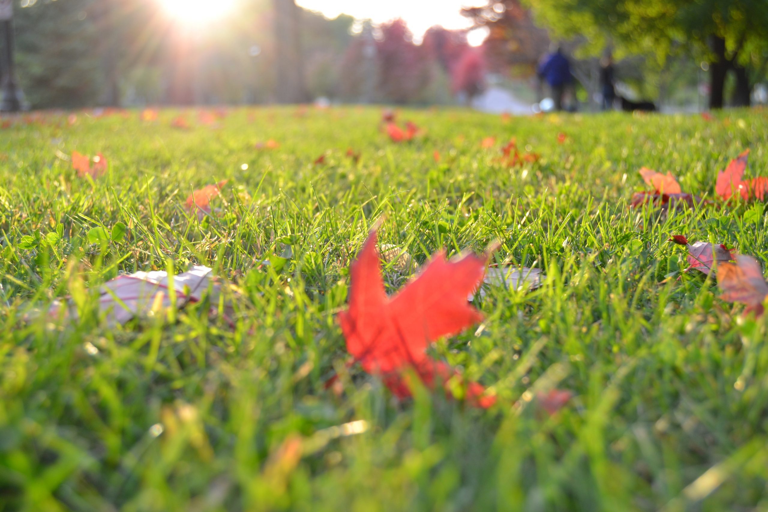 Organic Weed Control Methods for your Lawn