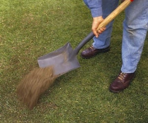 Man Top Dressing Buffalo Lawn