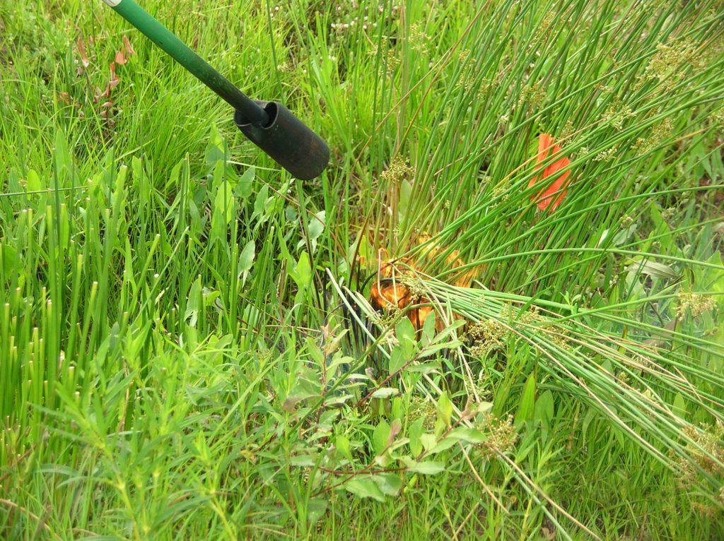 Weed Flamer Tool Torching Weeds