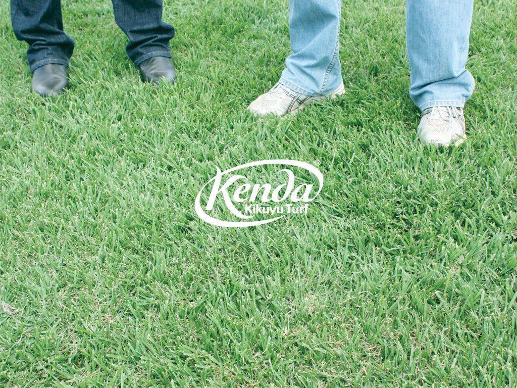 Kenda Kikuyu Turf - Perfect for Dogs & Pets