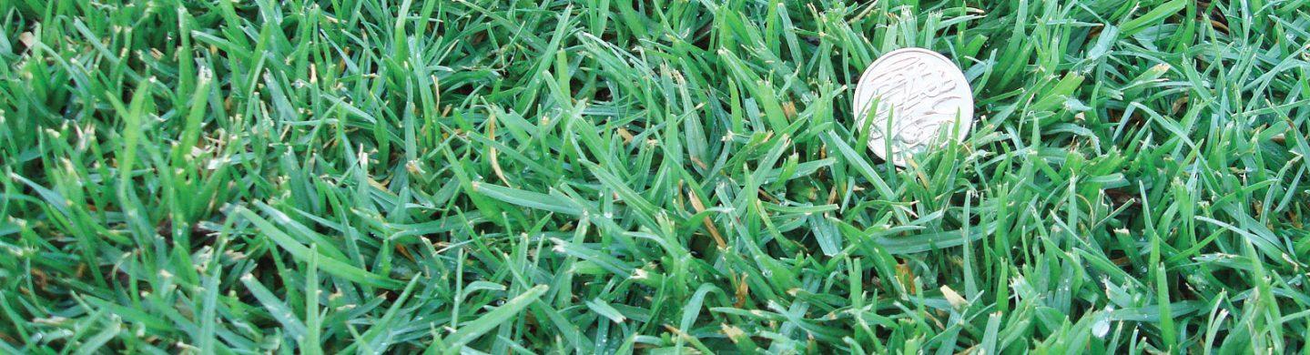 Kenda Kikuyu Grass with Coin Lying on Top