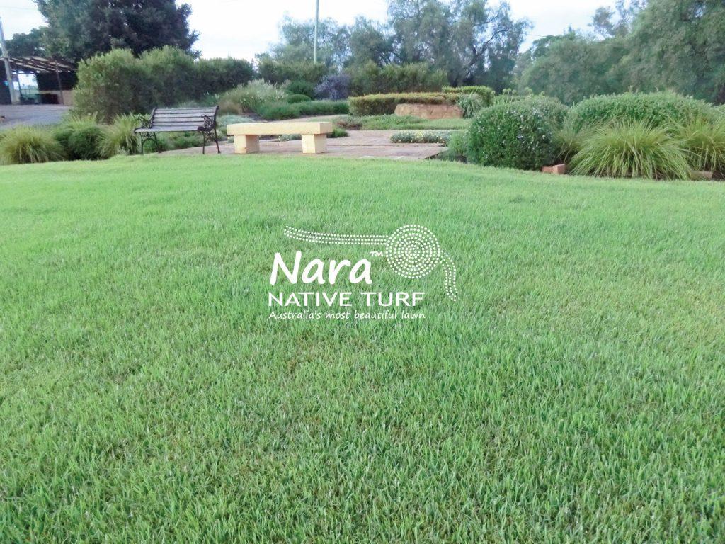 Nara Zoysia Lawn Brisbane
