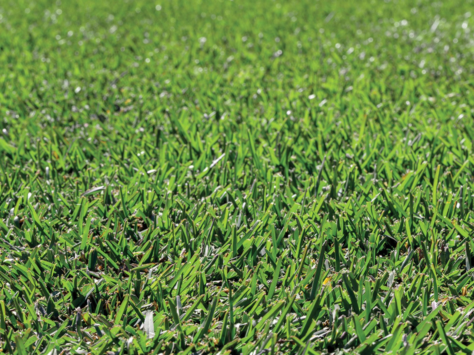 Environmentally-friendly lawns