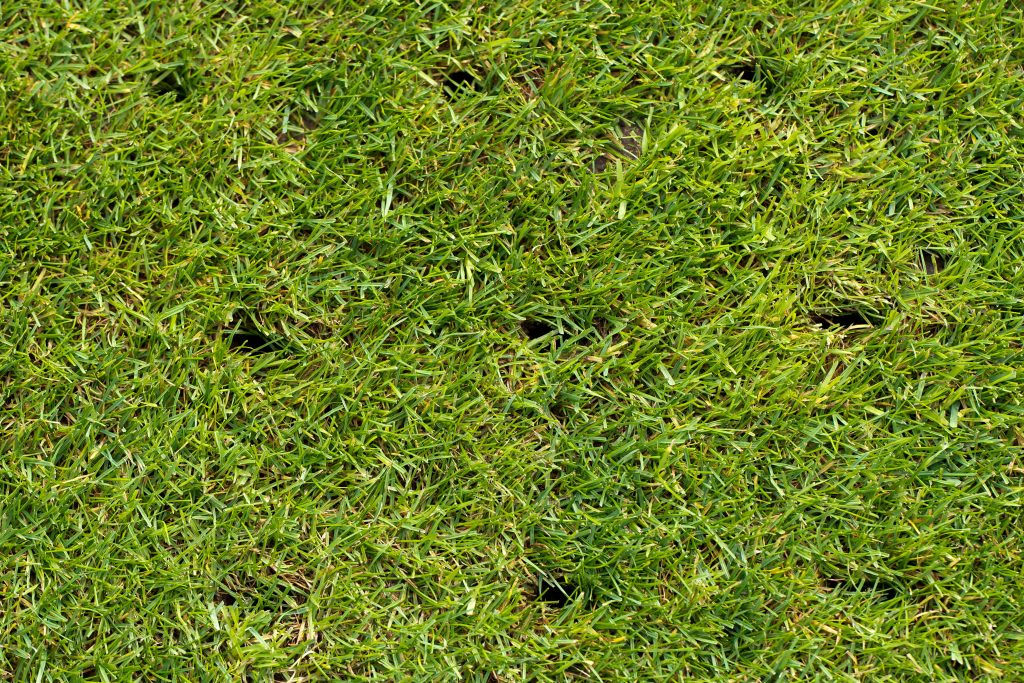 How to lawn repair a hard lawn - My Home Turf