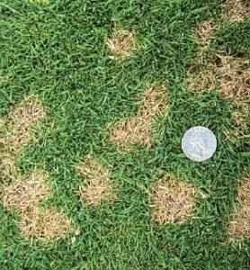dollar spot lawn disease