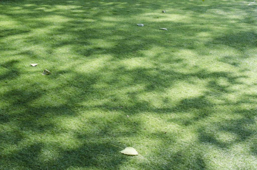 Heavily Shaded Lawn