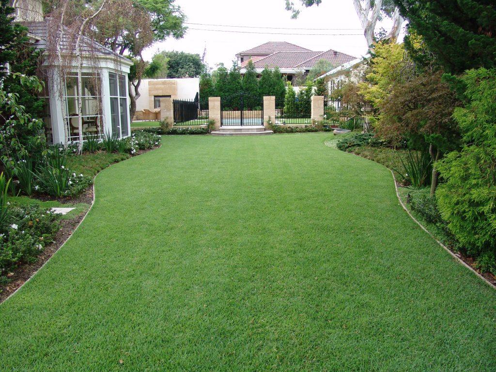 Empire Zoysia Lawn in Front Yard