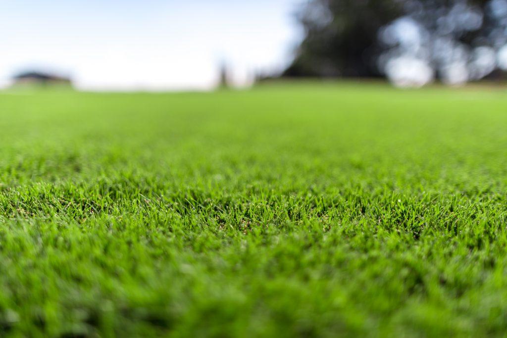 oval turf