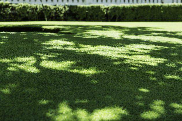 shaded lawn