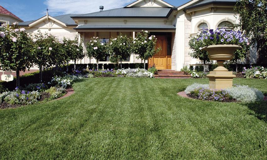Adelaide Buffalo Lawn