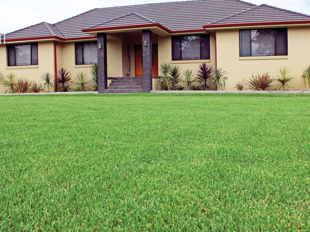 Best Turf Types For Perth Climate My Home Turf