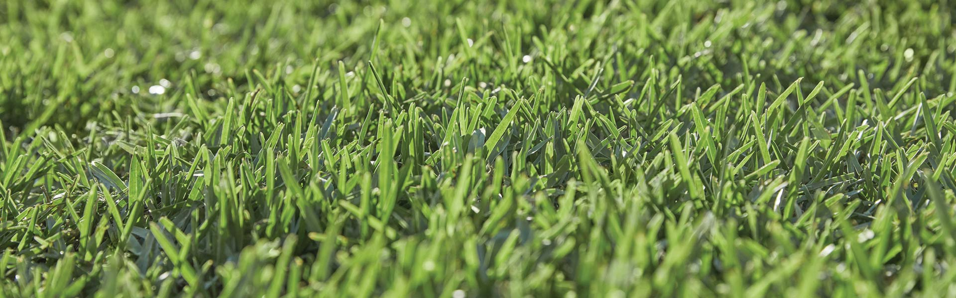Ridding Summer Grass from your lawn?